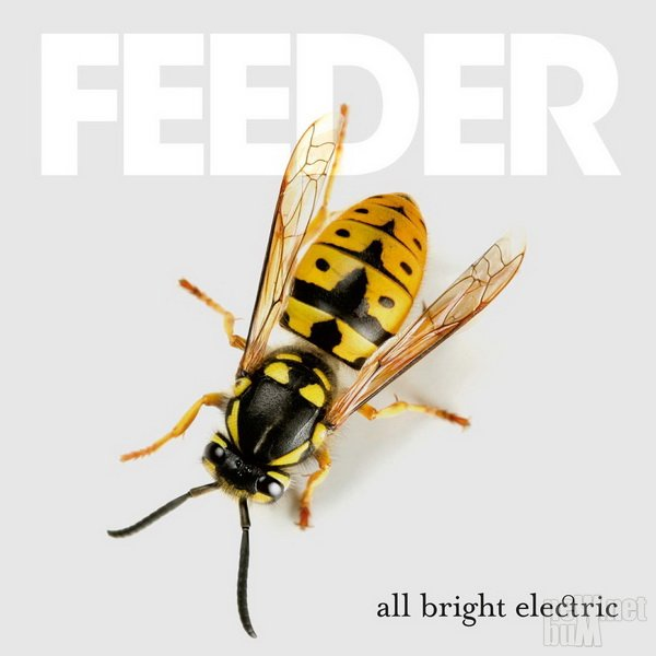 Feeder - All Bright Electric (2016)